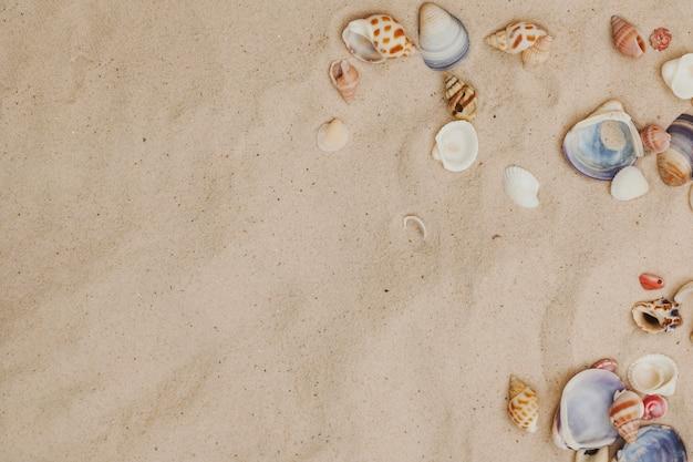 貝殻と空白のある砂地 無料写真