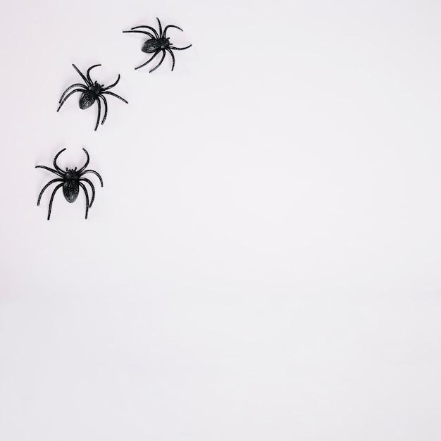 白い背景に黒いクモ 無料写真
