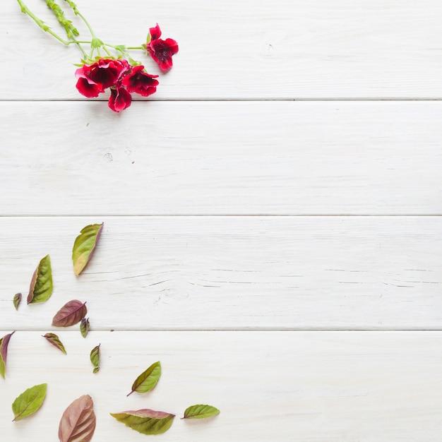 赤い花と葉 無料写真