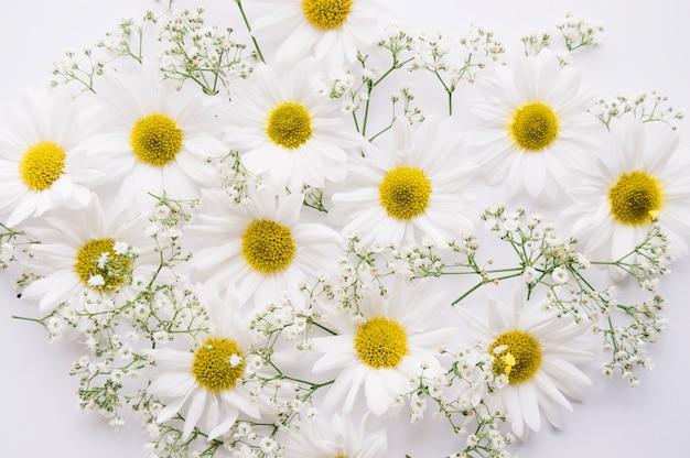 Ромашки и цветы младенца, смешанные на белом фоне Бесплатные Фотографии