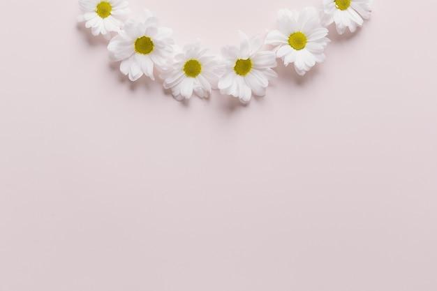 Состав ромашки на розовом фоне Бесплатные Фотографии