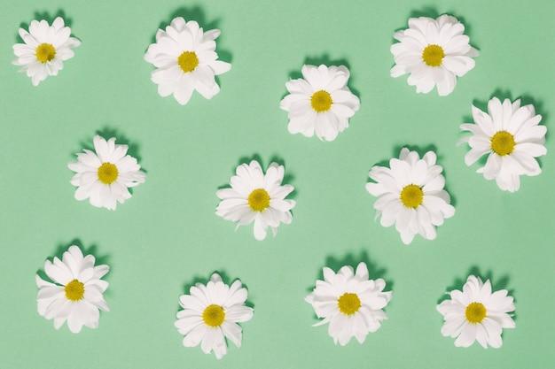 Ромашки на зеленом фоне Бесплатные Фотографии