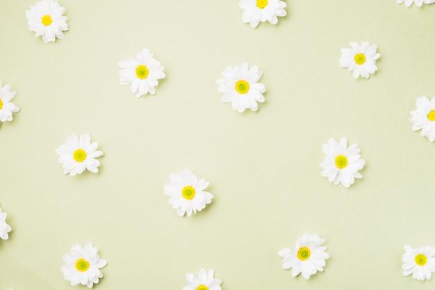 Ромашки на светлом фоне Бесплатные Фотографии