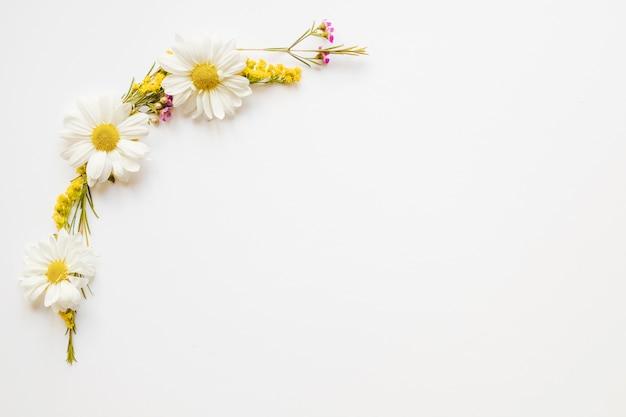 Композиция симпатичных ромашек Бесплатные Фотографии