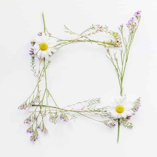 Рамка из ромашек и полевых цветов Бесплатные Фотографии