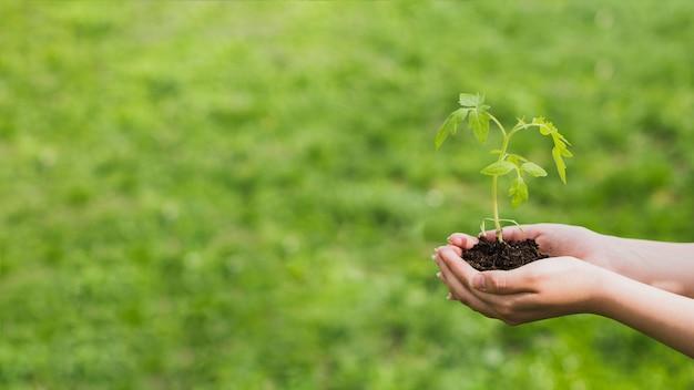 小さな植物を手に持つ手 無料写真
