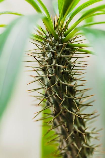 植物のスパイキー茎 無料写真