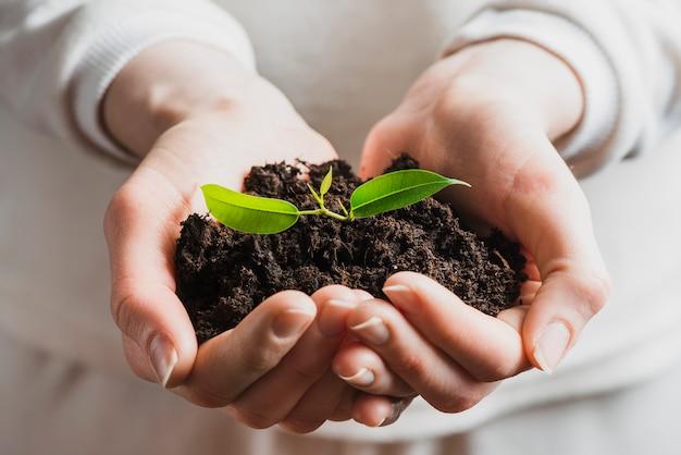 苗を土で保持する手のクローズアップ 無料写真