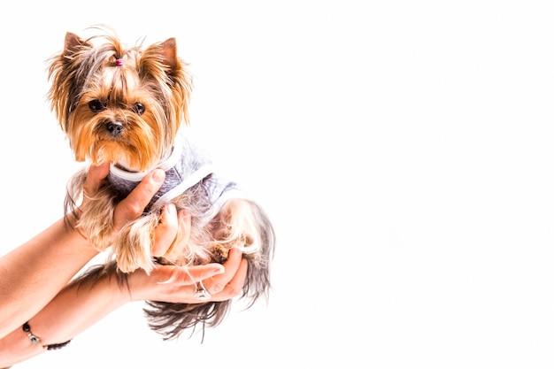 白い背景に親切な犬を持っている手のクローズアップ 無料写真