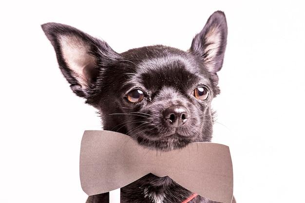 Портрет черной собаки-бостон-терьера с бабочкой Бесплатные Фотографии