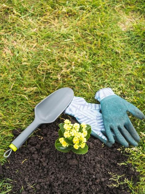 土壌から生えている黄色の開花植物 無料写真