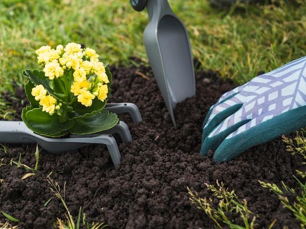 苗を植えるための土を掘る人の手 無料写真