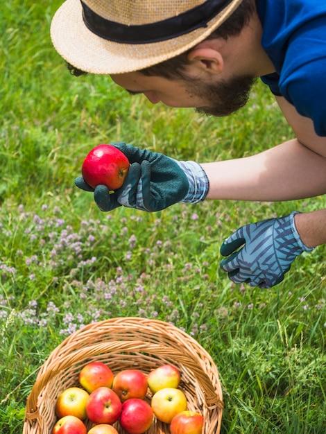 新鮮な赤いリンゴを見て庭師 無料写真