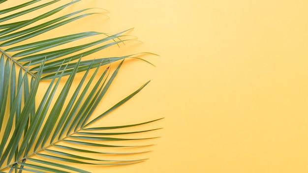 黄色の背景に緑のヤシの葉 無料写真