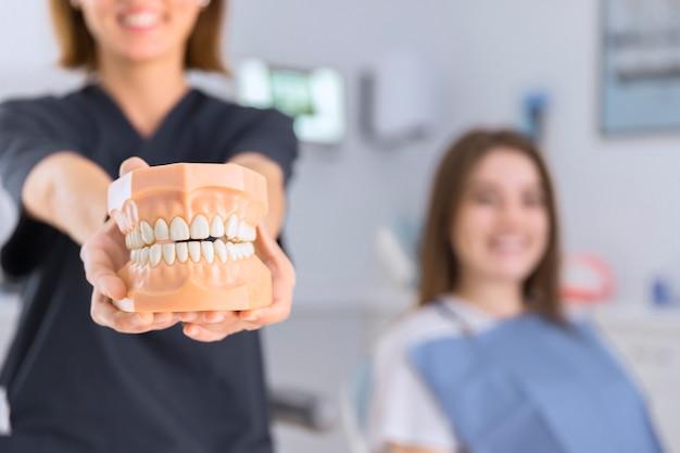 カメラの前に歯のモデルを示す女性の歯科医のクローズアップ 無料写真