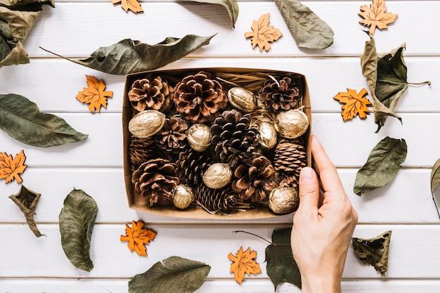 Сосновые шишки и орехи в коробке, сушеные листья на белом фоне Бесплатные Фотографии