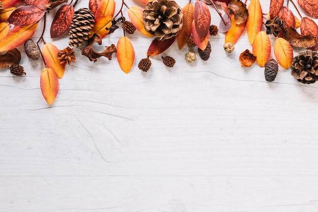 上にカラフルな葉 無料写真