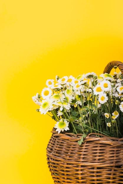 Крупным планом цветок цветков ромашки на желтом фоне Бесплатные Фотографии