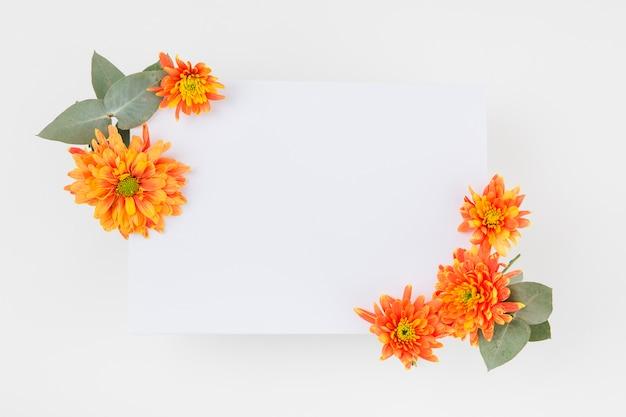 Оранжевые цветы хризантемы, украшенные на бумаге на белом фоне Бесплатные Фотографии