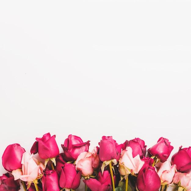 白い背景に赤とピンクのバラで作られたボトムの国境 無料写真