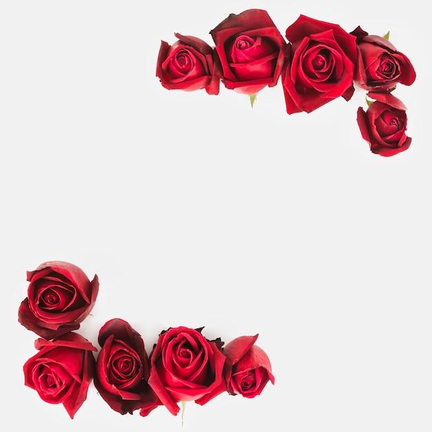 白い背景の角に赤いバラの装飾 無料写真
