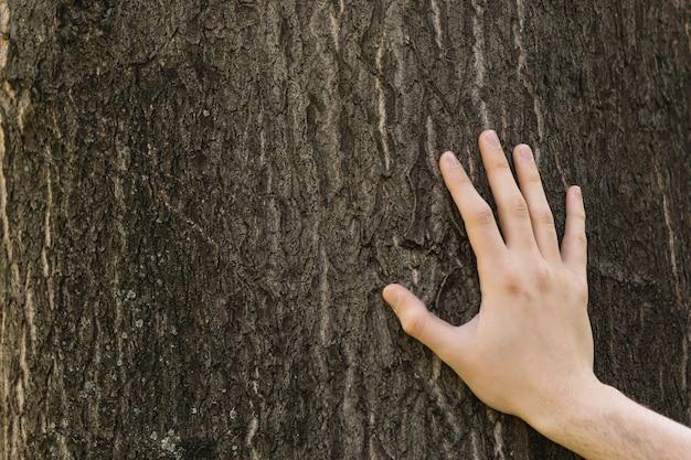 木、葉っぱに触れる手のクローズアップ 無料写真