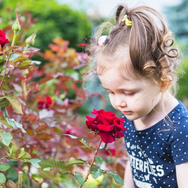 かわいい女の子は、庭で赤いバラを見て 無料写真