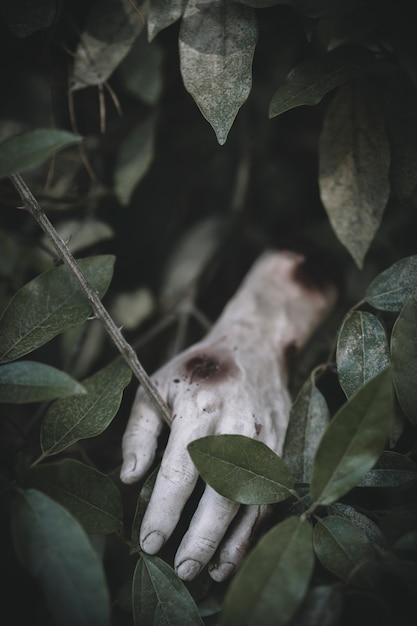 ゾンビの手が芝生から突き出ている 無料写真