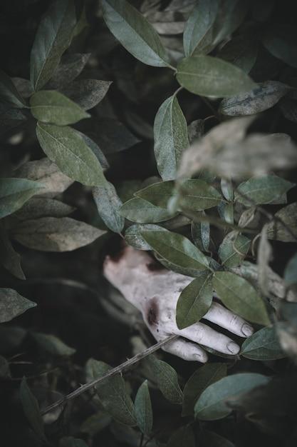 死んだ手が草から突き出ている 無料写真