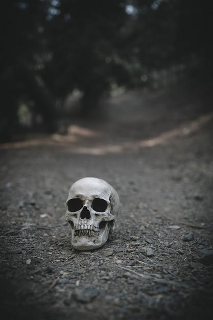 腐った頭蓋骨は土に置かれる 無料写真