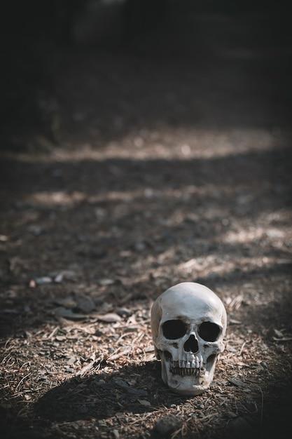 Мертвый череп помещается на серой почве днем Бесплатные Фотографии