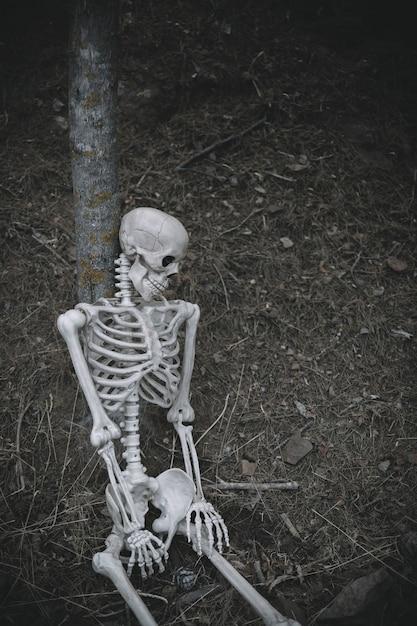 座っている骨格が森の木に寄りかかりました 無料写真