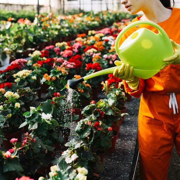 温室で花に水を注ぐ女性の手のクローズアップ 無料写真
