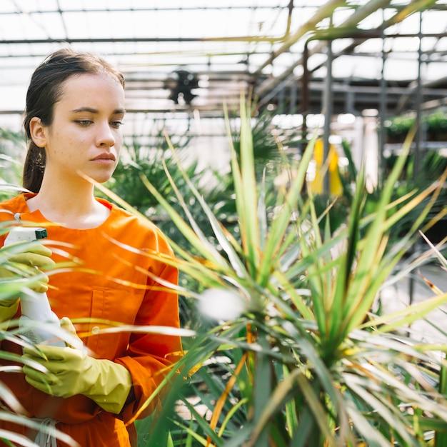 温室に植物を見てスプレーボトルと女性の庭師 無料写真