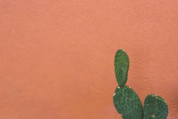 茶色の背景に対する梨状のノーパールのサボテン 無料写真