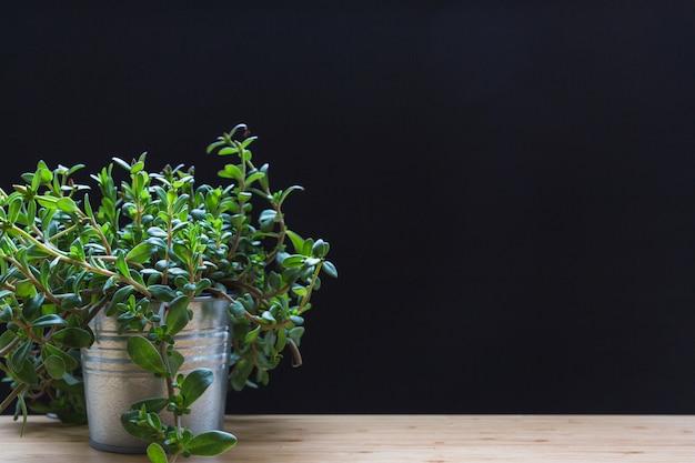 黒の背景に木製のテーブルにアルミポットの小さな植物 無料写真