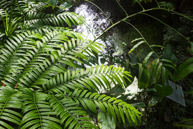 森林の湿った緑の植物 無料写真