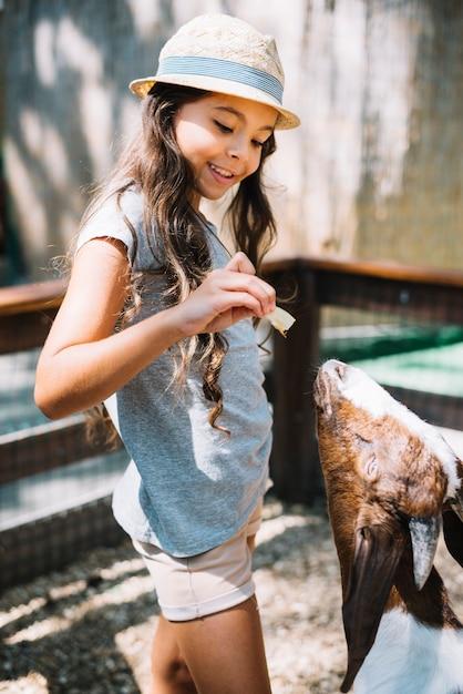 かわいい女の子が農場で山羊に食べ物を食べる 無料写真