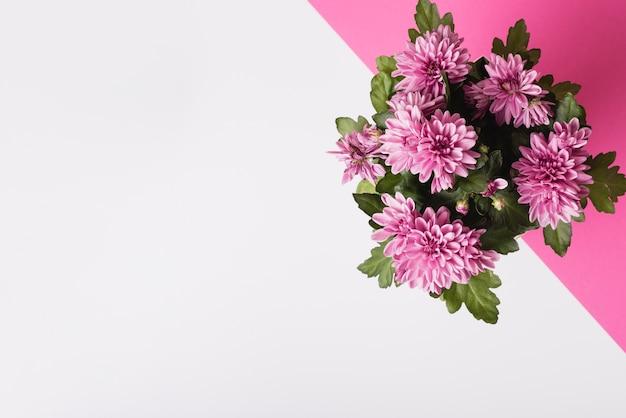 白とピンクの背景に菊の花の花束 無料写真