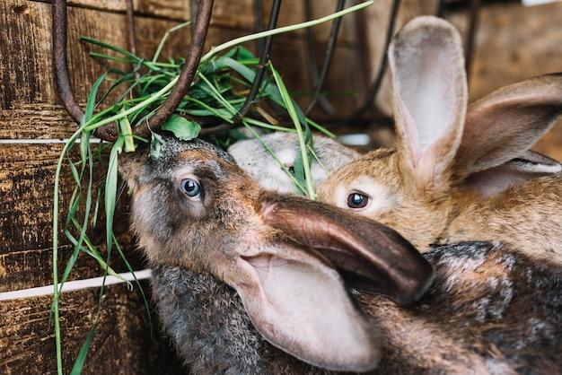 ウサギ、草を食べる、クローズアップ 無料写真