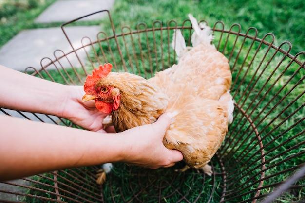 金属ケージに鶏を抱えている人の手 無料写真