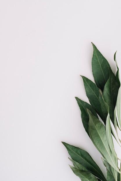 白い背景に緑の葉のクローズアップ 無料写真