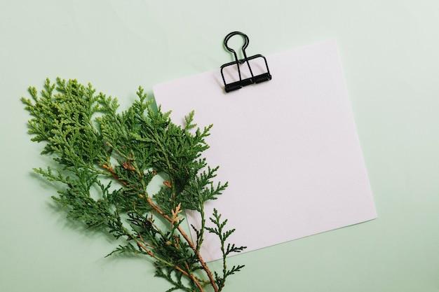パステルの背景の上にクリップ付きの白い白い紙とシダーの小枝 無料写真