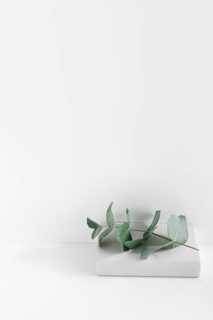 白い背景の本の上に緑の小枝 無料写真
