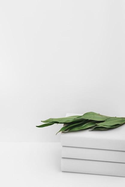 白い背景に対して本の積み重ねに緑の葉 無料写真