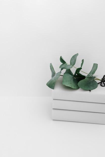 白い背景で隔離された本の上に緑の小枝 無料写真