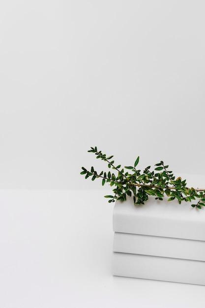 白い背景に対して積み重なった本の上に緑の木の枝 無料写真