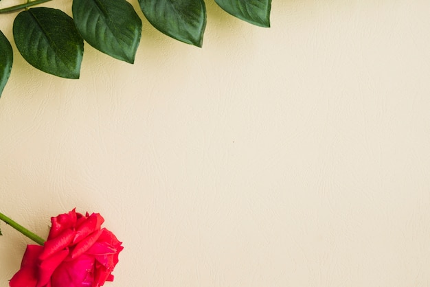 赤、ベージュの背景に緑の葉でバラ 無料写真