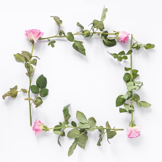 白い背景に正方形のフレームを形成するバラの花の高い角度のビュー 無料写真