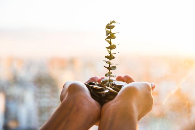 コインから生える植物 無料写真